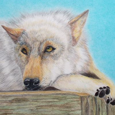 Relaxation Wolf-in coloured pencil - Dora Carrington