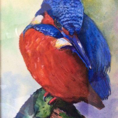 Kingfisher - Yvonne Shayler