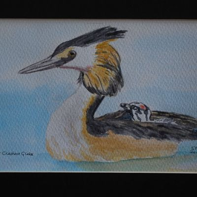 Great Crested Grebe - Susan Ball