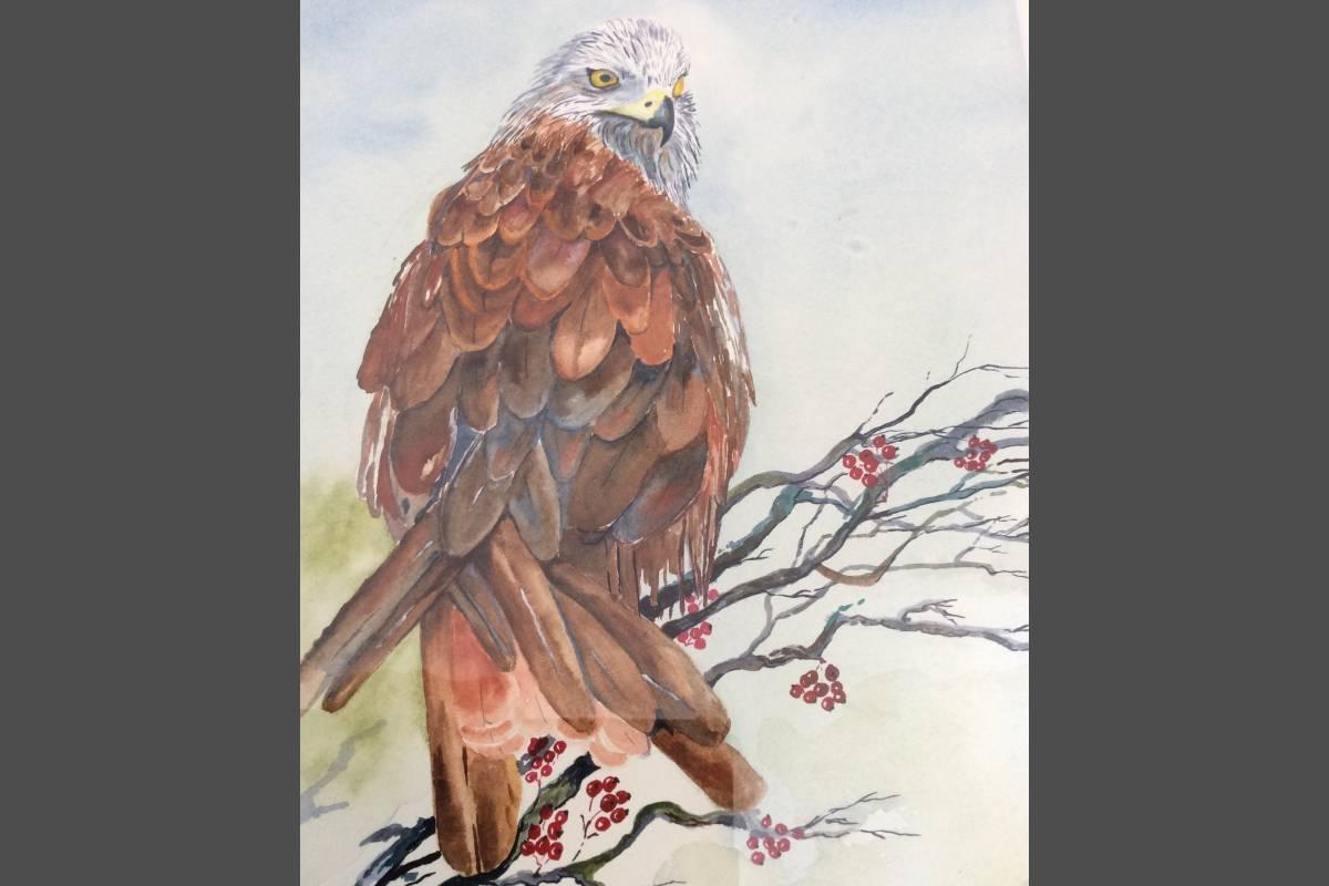 The Red Kite - Yvonne Shayler