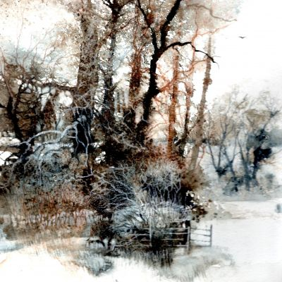 Trees In Snow - Nicky Clarke