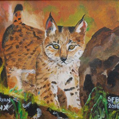 Iberian Lynx - Susan Ball