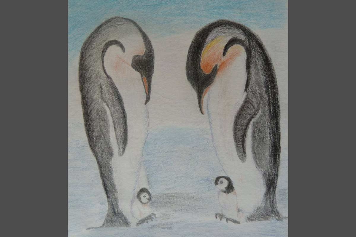 Penguins in Pencil - Christine Smith