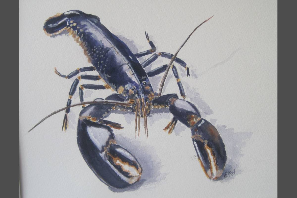 Lobster - Elizabeth Webster