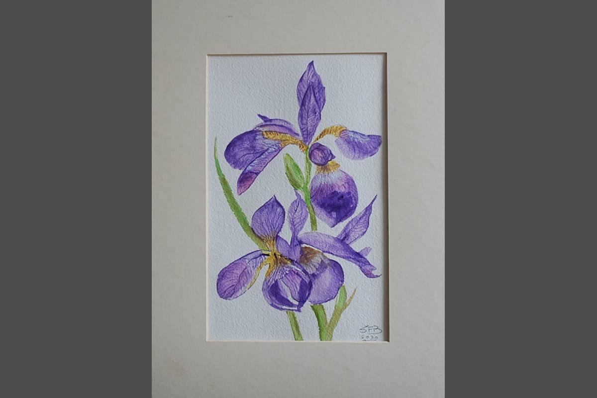 Iris - Susan Ball