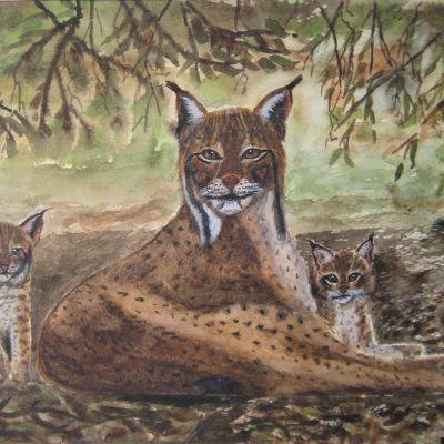 Eurasion Lynx Family - Elizabeth Webster