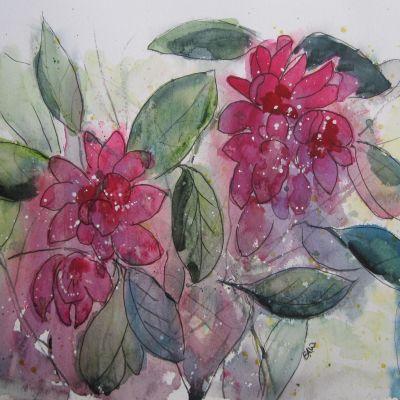 Cancan Dancers in the Rhododendrons - Elizabeth Webster