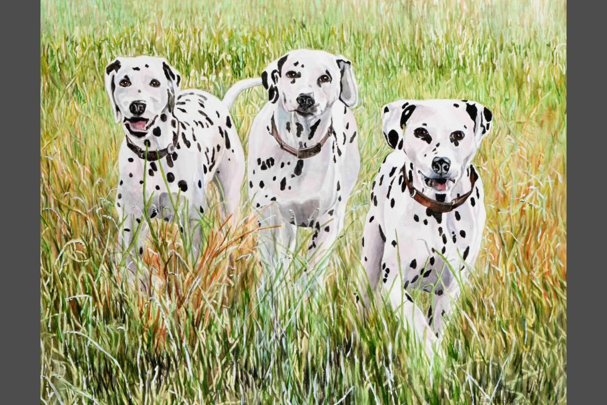 Dalmatians - faye edmonson