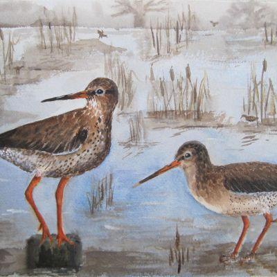 Common Redshanks - Elizabeth Webster