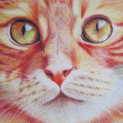 Ginger Cat Face - Dora Carrington (Coloured Pencil)