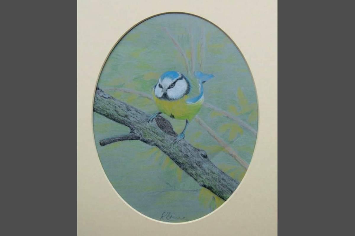 Blue Tit - Ron Brine