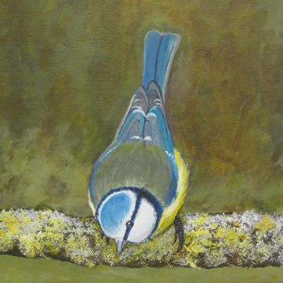 Blue Tit - Carol Steele
