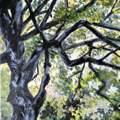 Canopy 1 - Jill Preston