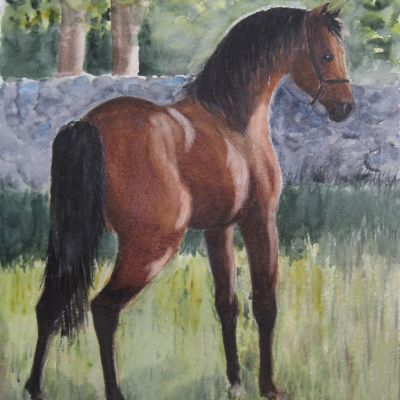 Caspian Stallion - Elizabeth Webster <https://inadretsof.wixsite.com/lizwebsterart>