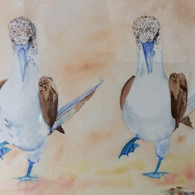 STRICTLY blue footed boobies - Yvonne Shayler