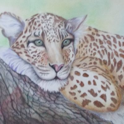 Restful Leopard-in coloured pencil - Dora Carrington